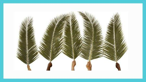 History of Palm Leaves and Branches
