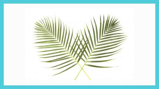 Present Palm Leaves and Branches