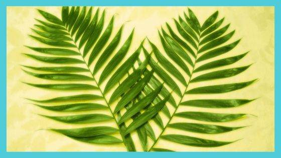 Significance of Palm Branches