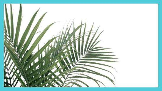 Why Palm Leaves and Branches