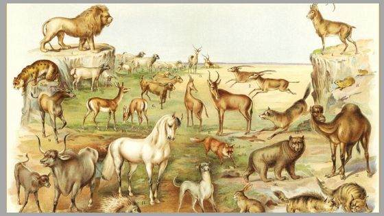 All Animals in the Bible