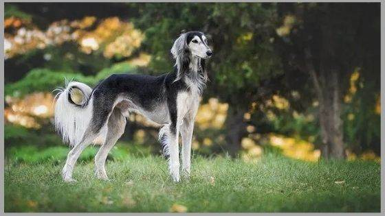 Dog breed specifically mentioned in the Bible