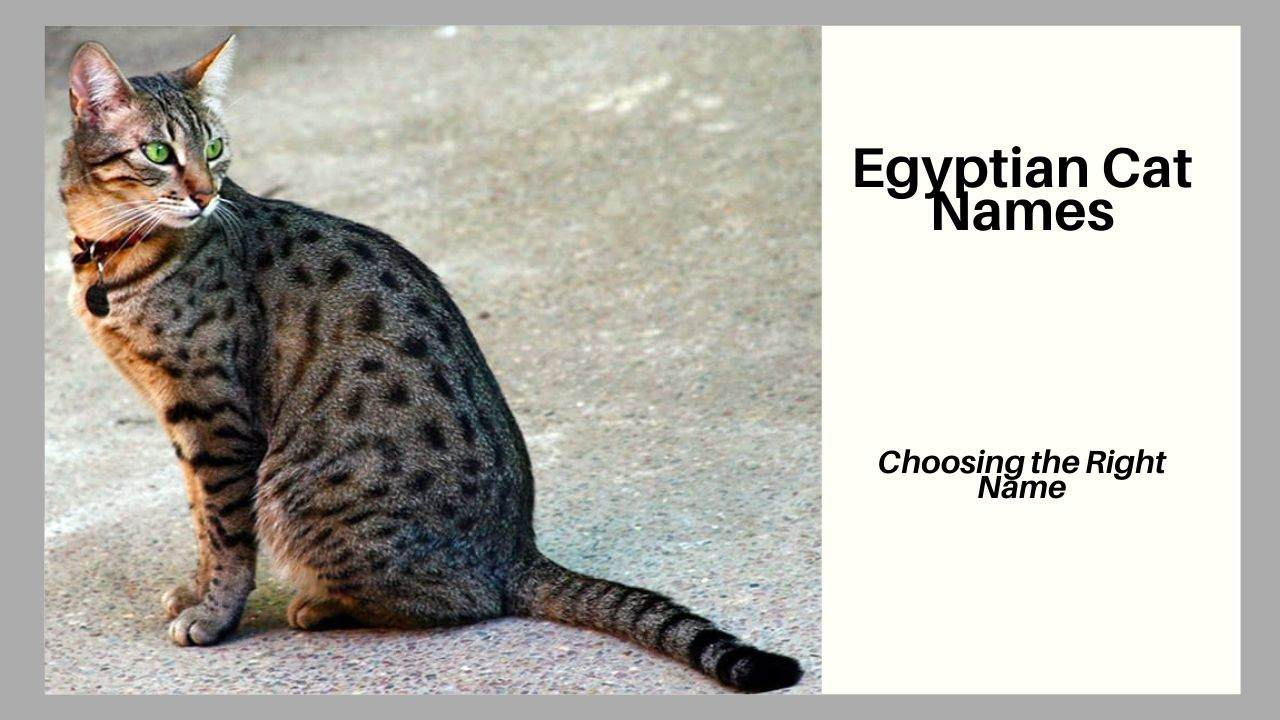 Best Egyptian Cat Names with Symbolism