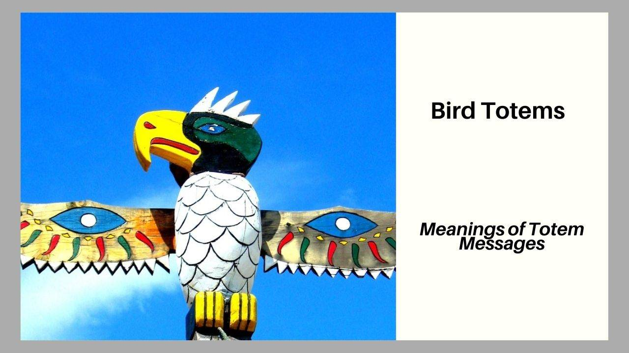 Bird Totems Meanings and Messages