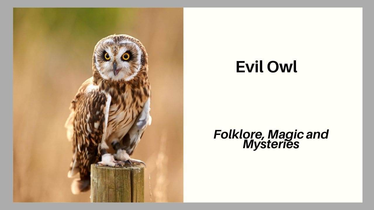 Evil Owl Folklore, Magic and Mysteries