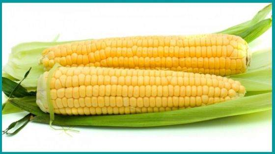 Are Ears of Corn called like that?