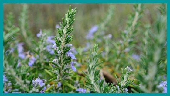 Protection Herbs for Enhancing Beauty