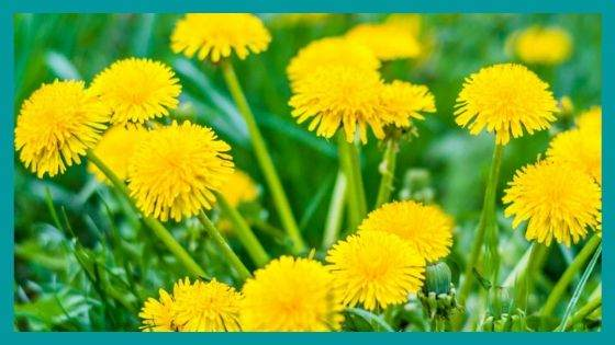 Protection Herbs for Handling Depression
