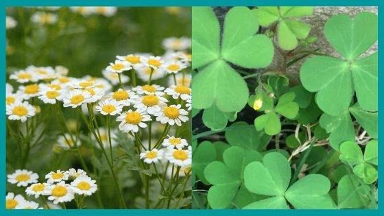 Protection Herbs for Wealth and Prosperity