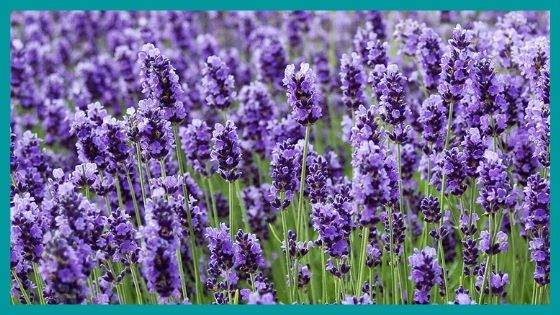 Protection Herbs for getting sleep