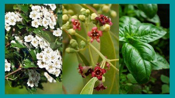 Protection herbs well known for Business Growth