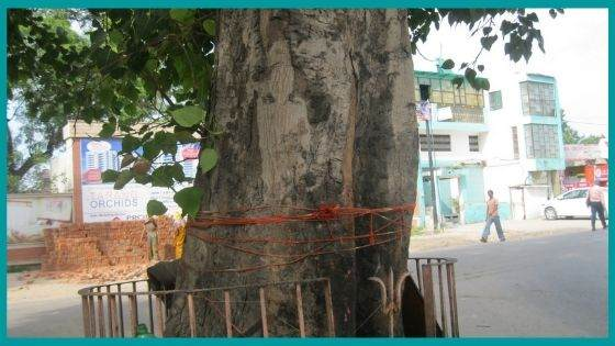 What are the Remedies offered by worshipping Peepal tree?
