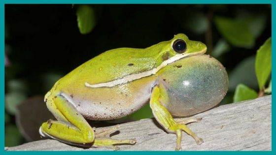 What are the symptoms to identify someone having fear of frogs?