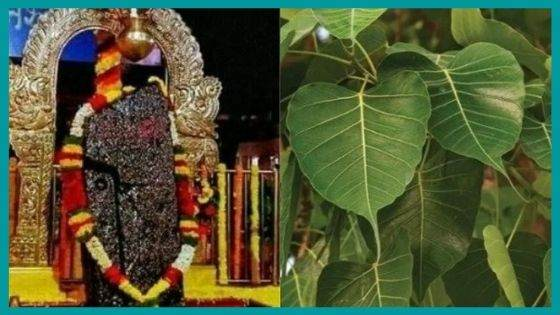 What is the Significance of Peepal Tree as per Astrology