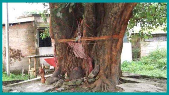 What problems can be solved on worshipping Peepal Tree?